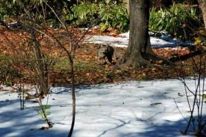 日比谷公園 元日の雪とキジトラ猫