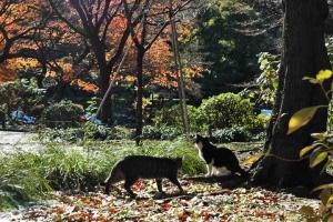日比谷公園 元日の紅葉と2猫
