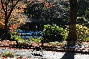 日比谷公園 元日の紅葉と歩く白黒猫