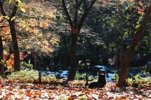日比谷公園 元日の紅葉と座っている後ろ姿の猫