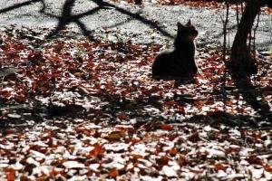日比谷公園 元日の落ち葉と木を見上げる猫
