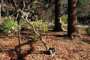 日比谷公園 木の上のキジトラ猫と下の白黒猫