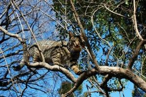 日比谷公園 木の上のキジトラ猫と背景の青空