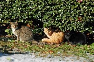 日比谷公園 雪とカメラ目線の三猫(キジトラ白猫、茶トラ猫、黒白猫)