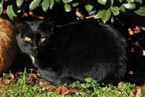 日比谷公園 黒白猫