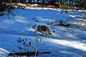 日比谷公園 雪と三毛猫