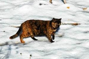 日比谷公園 雪とサビ猫