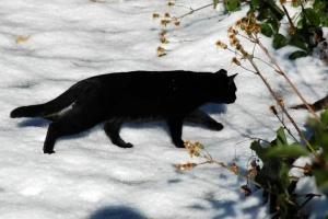 日比谷公園 雪と黒猫