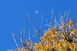 日比谷公園 元日のイチョウ紅葉(黄葉)と青空と飛行機