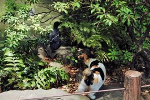 日比谷公園の三毛猫さくら カラスの子を見ている