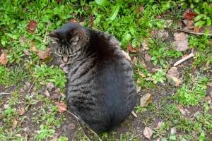 日比谷公園のキジトラ猫の背中