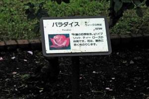 薔薇パラダイスの花名板