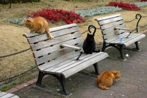 日比谷公園のベンチの茶トラ猫、黒猫、茶トラ猫