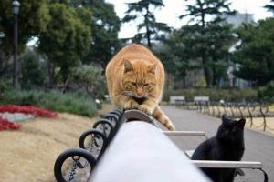 日比谷公園のベンチの茶トラ猫、黒猫