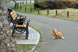 日比谷公園の思い出ベンチと猫