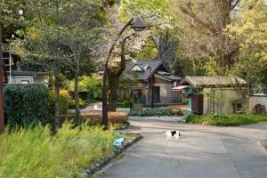 日比谷公園:桜猫が道を横切る
