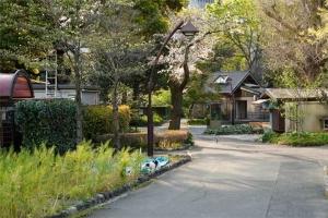 日比谷公園管理事務所の横の通りの山桜と猫