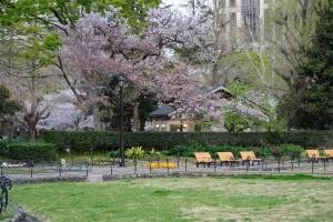 日比谷公園の第一花壇の広場の桜