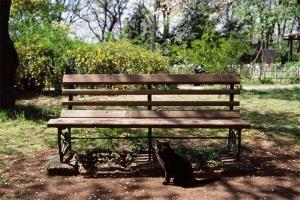 小石川植物園の黒猫