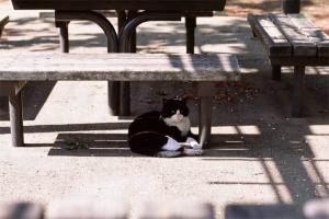 小石川植物園の黒白猫