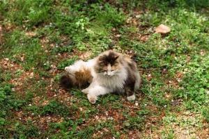 小石川植物園のエキゾチックな猫