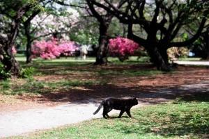 晩春の小石川植物園の黒猫