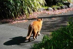 日比谷公園の茶トラ猫と花屑