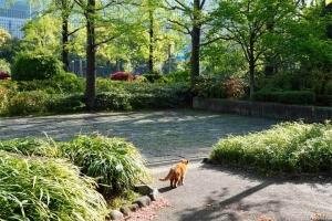 日比谷公園の新緑と茶トラ猫