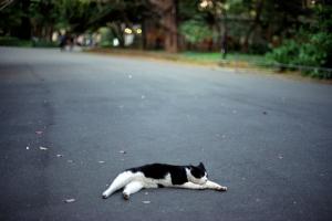 日比谷公園の黒白猫