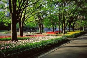日比谷公園のケヤキの新緑とチューリップ花壇