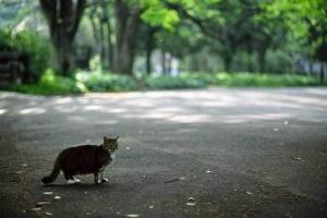 日比谷公園のキジ白猫と新緑