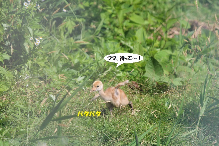IMG_0087 - コピー