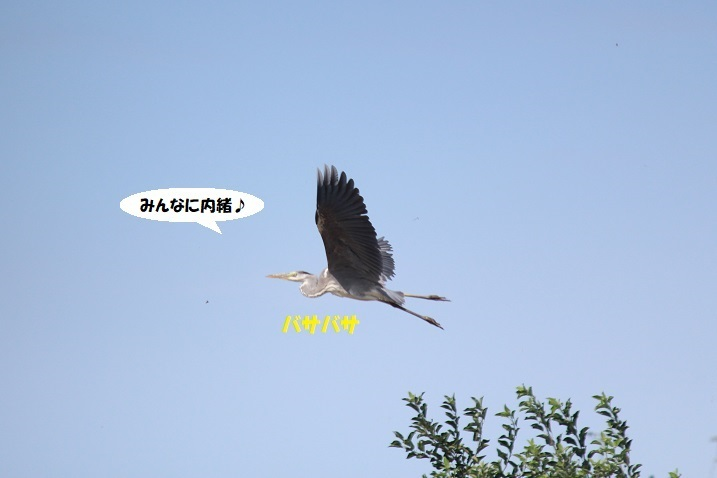 IMG_0102 - コピー - コピー