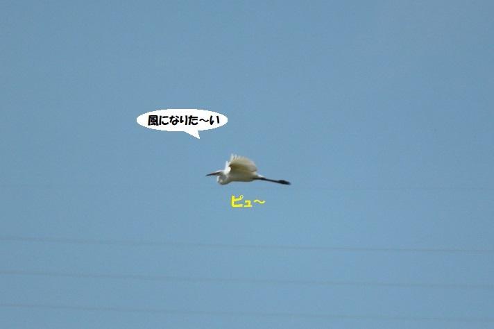 IMG_0132 - コピー