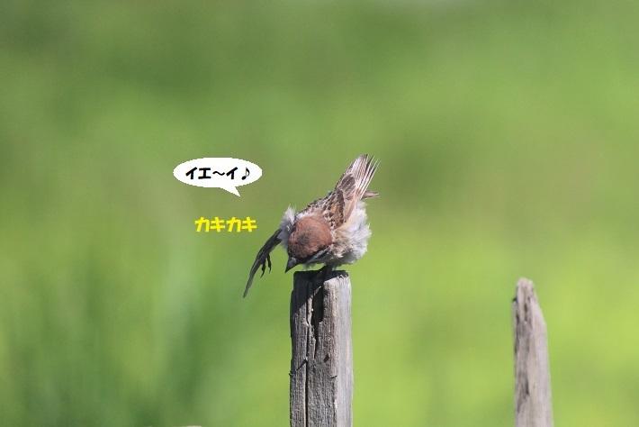 IMG_0170 - コピー