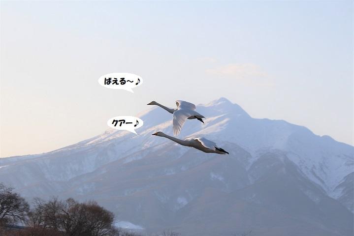 IMG_0260 - コピー