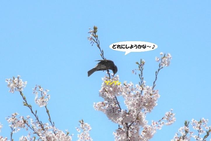 IMG_0007 - コピー