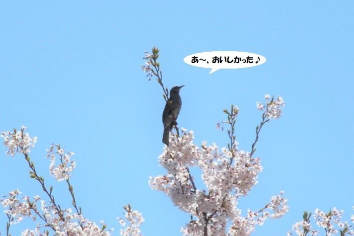 IMG_0004 - コピー