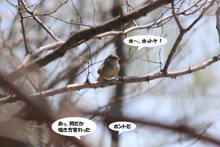 IMG_0022 - コピー (2)