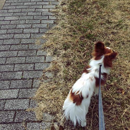 帰りは芝生の上を歩く