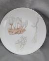 2020変形菌絵皿シロウツボホコリ