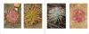 Australian_Carnivorous_Plants3.jpg