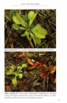 Dionaea2.jpg