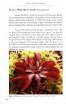 Dionaea4.jpg