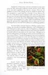 Dionaea6.jpg