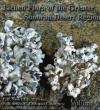 Lichen_Flora_of_the_Greater_Sonoran_Desert21.jpg