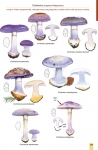 MushroomsOfBratinVo3-2.jpg