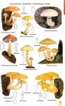 MushroomsOfBratinVo3-3.jpg