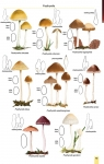 MushroomsOfBratinVo3-4.jpg