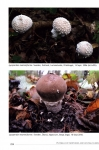 Puffballs_of_Northern_and_Central_Europe2.jpg